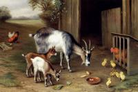 Edgar Hunt : Goats And Poultry