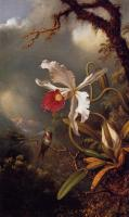Martin Johnson Heade : An Amethyst Hummingbird with a White Orchid