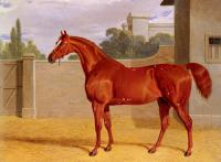 Herring, John Frederick Jr : Comus, A Chestnut Racehorse in a Stable Yard