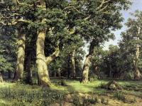 Ivan Shishkin : Oak of the Forest