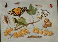 Jan Van Kessel : Butterflies and Insects